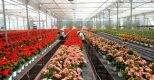 Nữ TTS trồng hoa