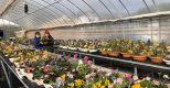 TB94 Tuyển nữ Trồng hoa trong nhà kính
