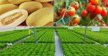 TB193 Nông nghiệp trồng trọt