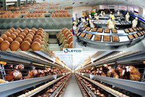 TB93 Chăn nuôi gia cầm và phân loại trứng